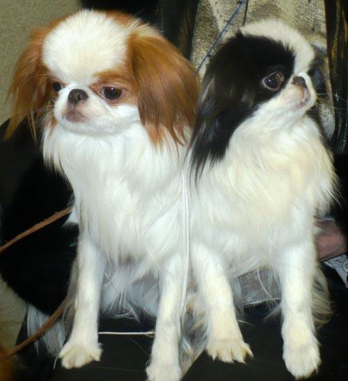Питомник собак фото 4